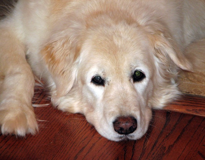 Pookie-Dec2005