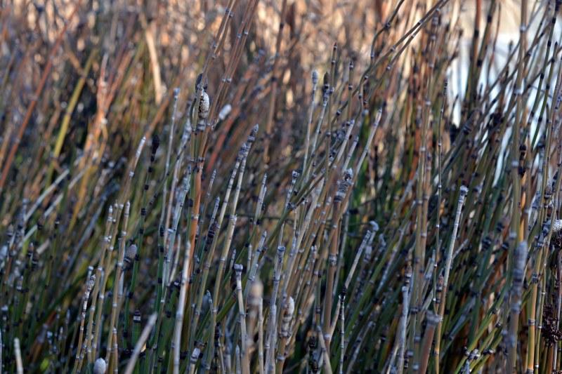 Reeds-12_29_13