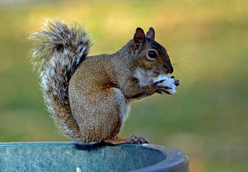 Squirrel-11_30_13