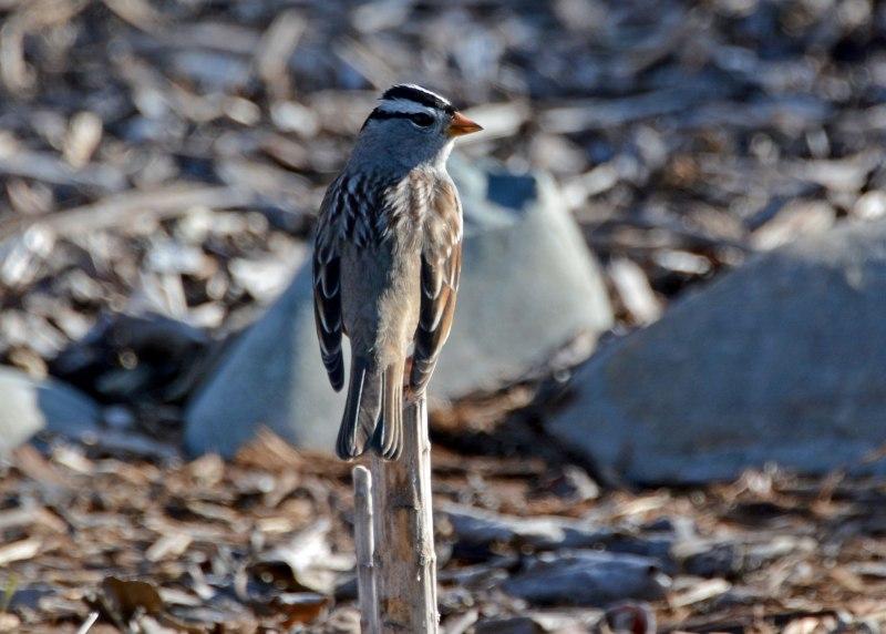 Bird-on-Stick-1_14