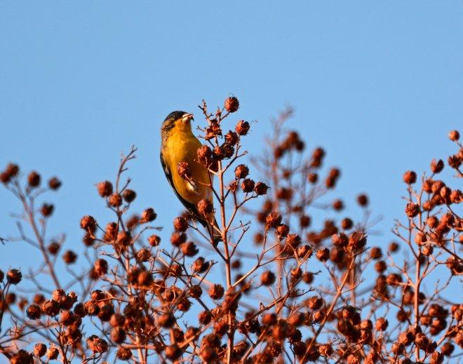 Bird-Seeds2-1_14