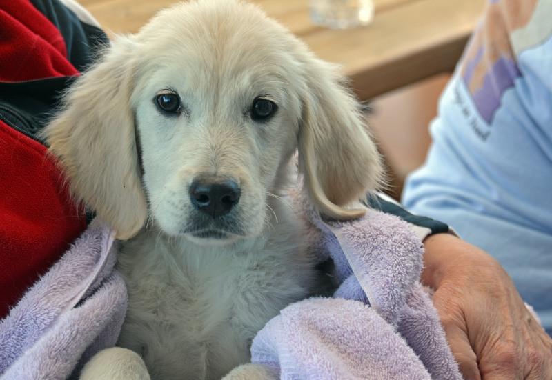 Puppies2-1_15_14
