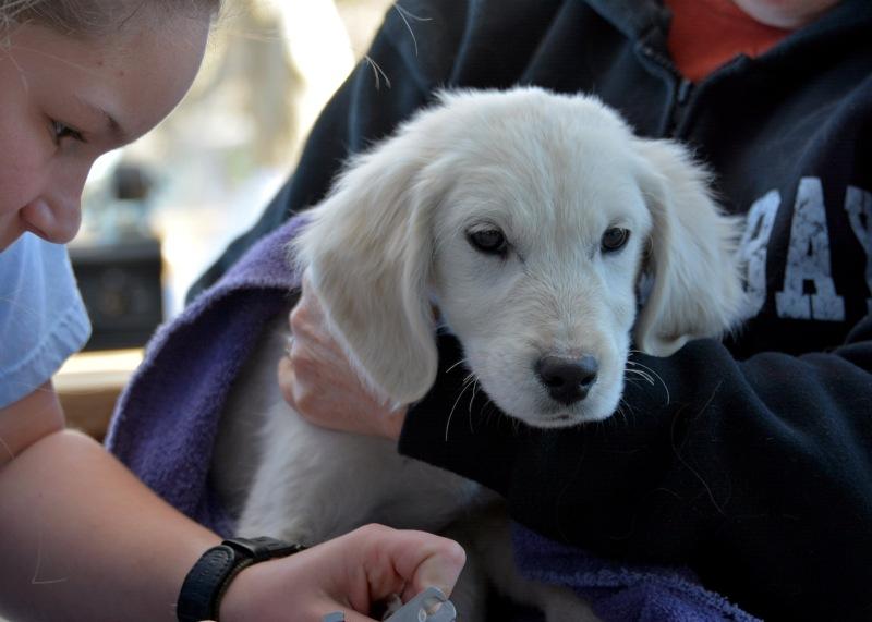 Puppies4-1_15_14