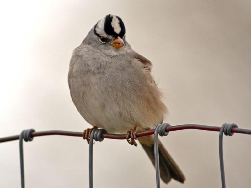 Bird-on-Wire2-2_2_14