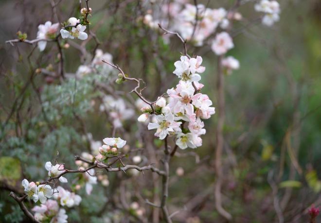 Blossoms_DSC9305