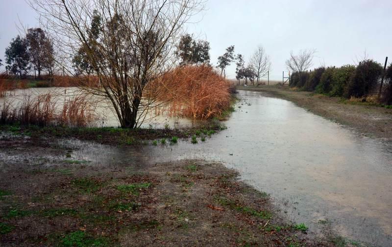 Pond_rain_2_14