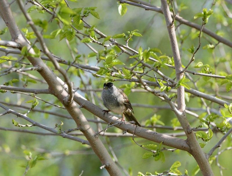 Bird_DSC_1622