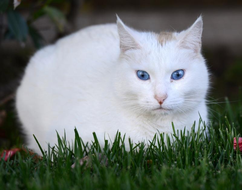 Cat_DSC_9219