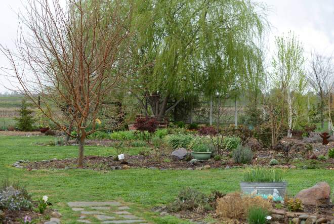 Garden_3_12_DSC_0811