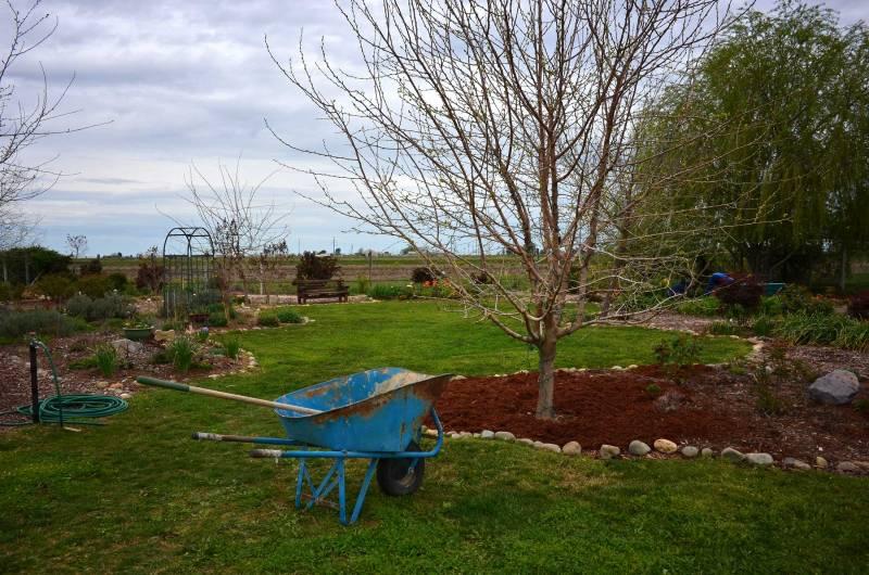 Garden_3_14_DSC_0309