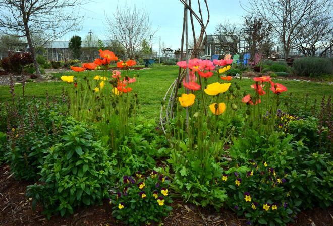 Garden_3_14_DSC_0315