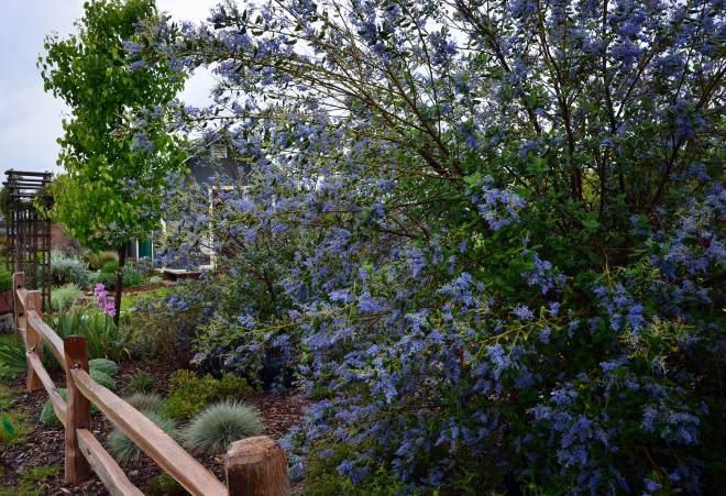 Garden_3_29_14_DSC_0458
