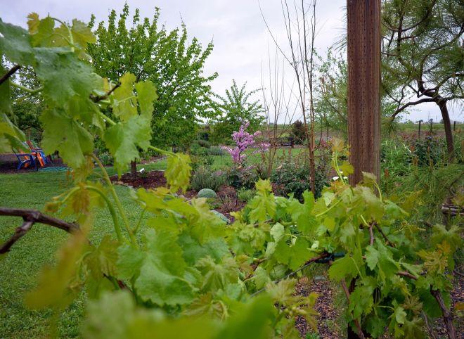 Garden_3_29_14_DSC_0466