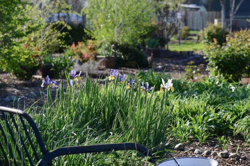 Garden_DSC_1704