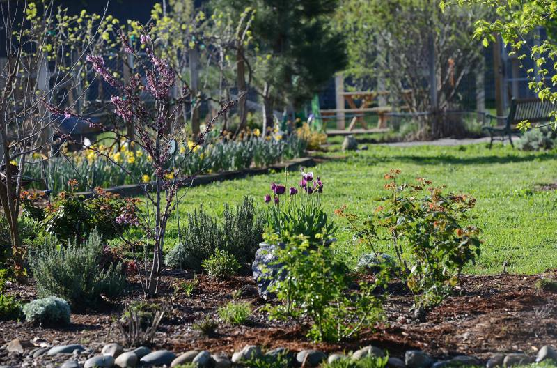 Garden_DSC_1706