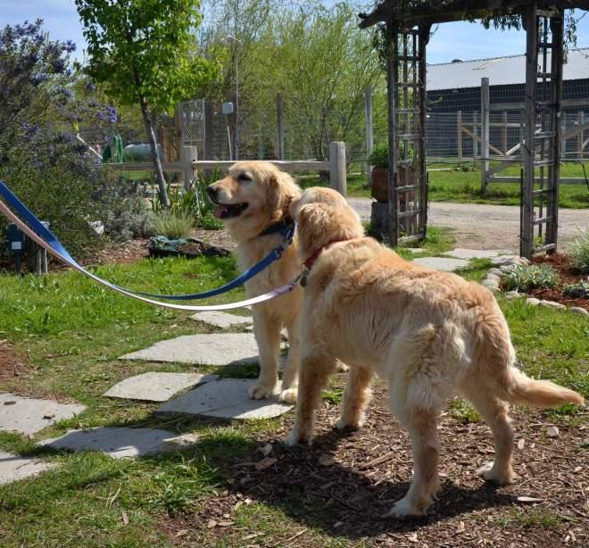 Reservoir-Dogs_DSC_0333