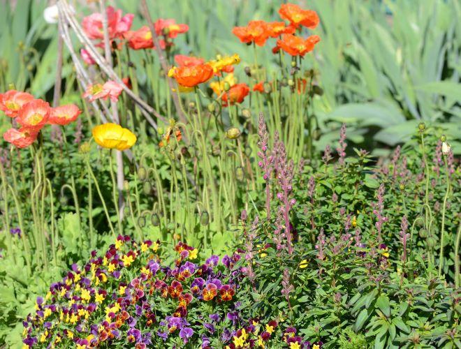 Spring-Color_3_14