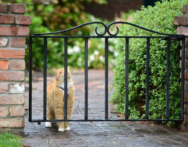 Cat_DSC_1331