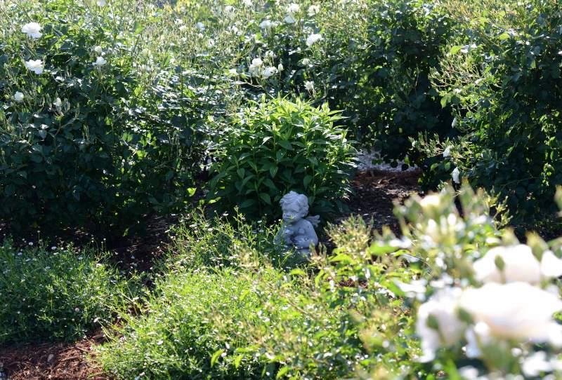 Garden_4_12_14_DSC_0797