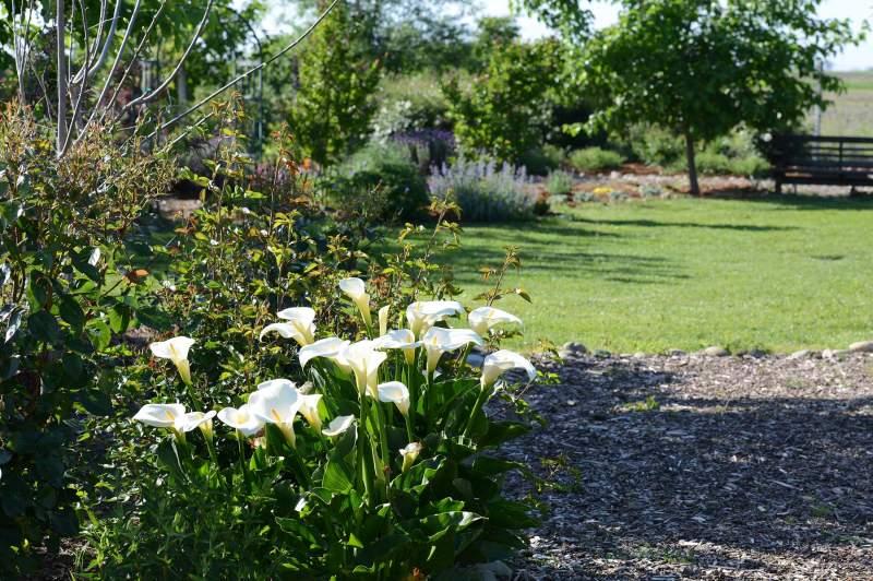 Garden_4_12_14_DSC_0808