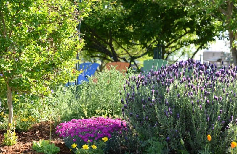 Garden_4_12_14_DSC_0821