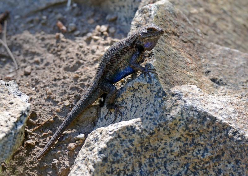 Lizard_DSC_0844