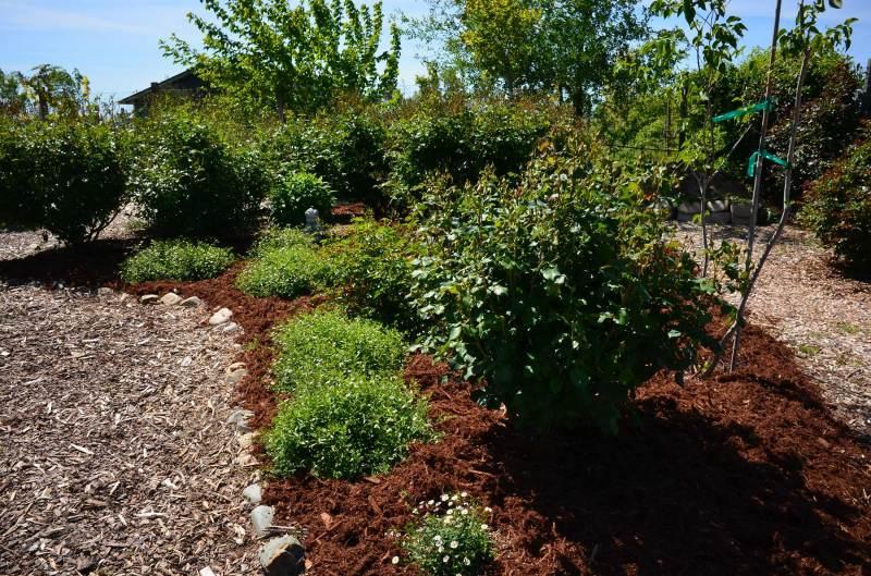 Rose-Garden-4_14_DSC_0516