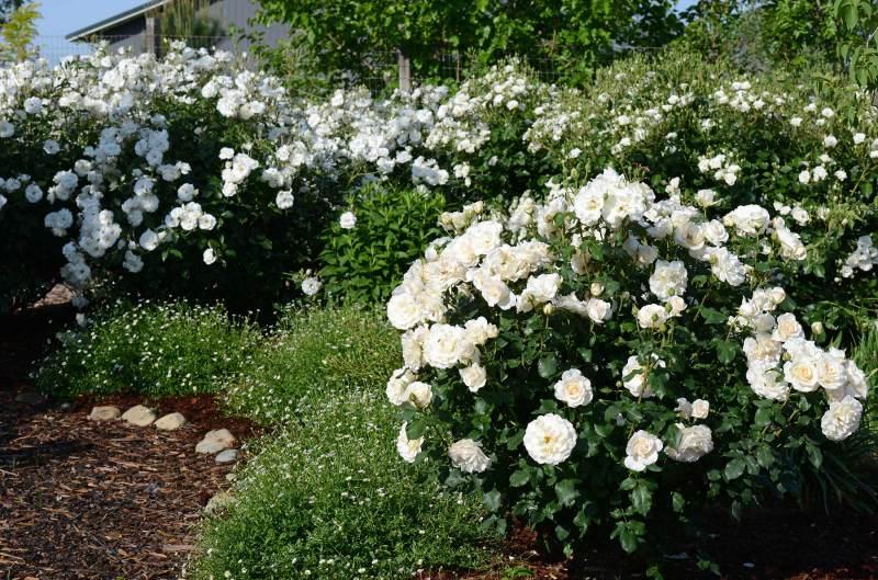 White-Garden_DSC_1139