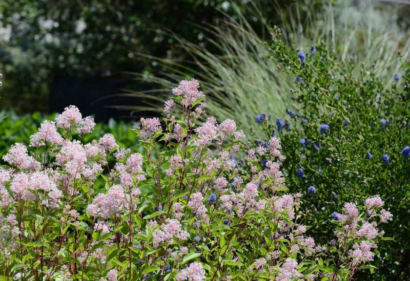 Calif-Garden_DSC_2466