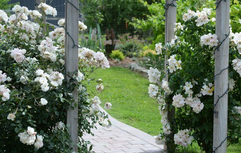 Garden-arbor_DSC_2214