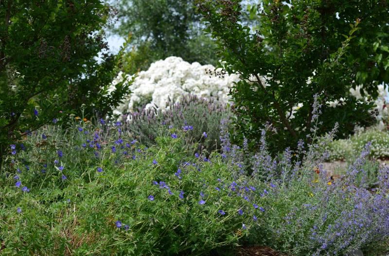 Garden_DSC_2208