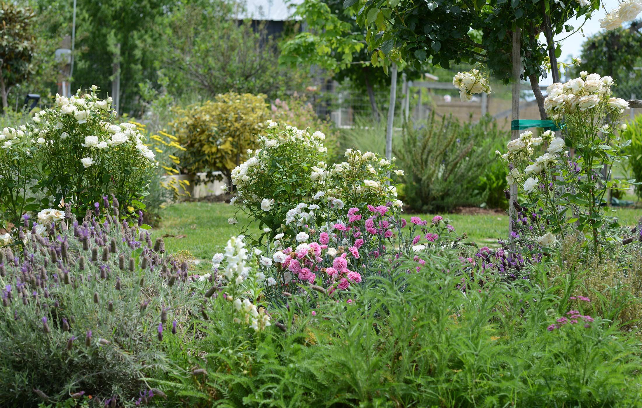 Garden_DSC_2209