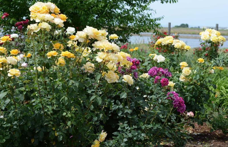 Garden_DSC_2212
