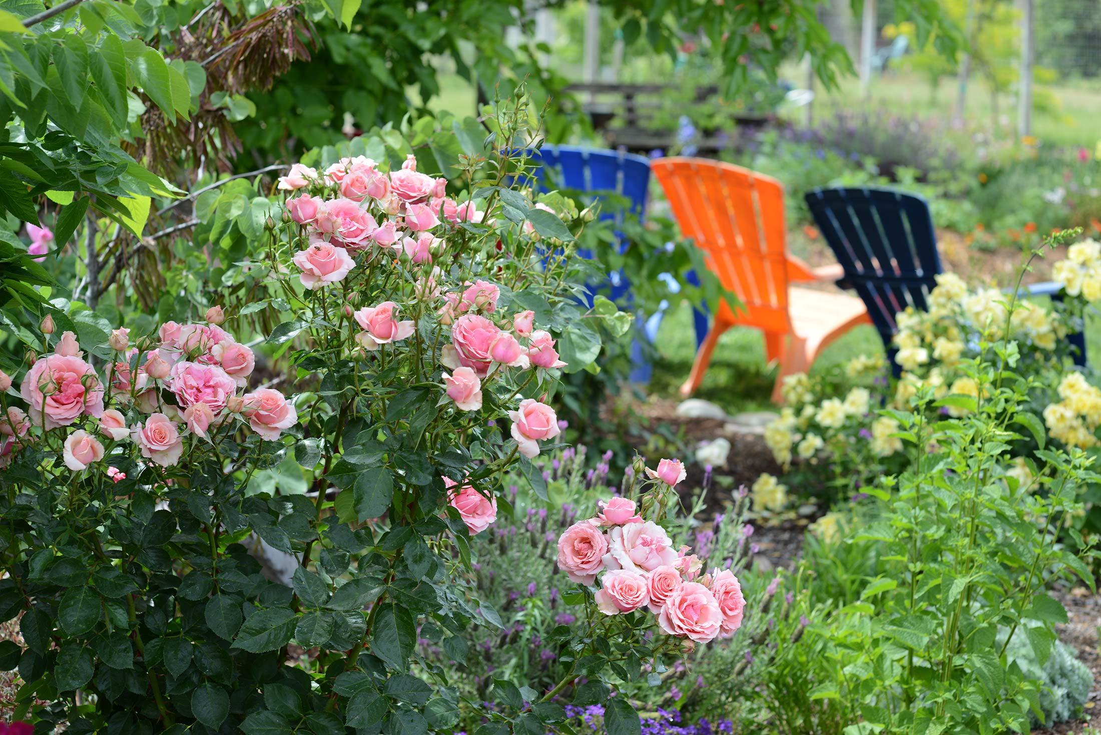 Garden_DSC_2213