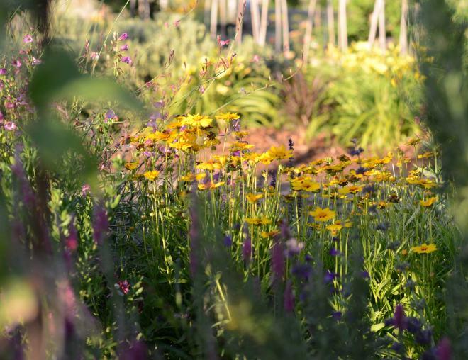Garden_Evening_DSC_3799