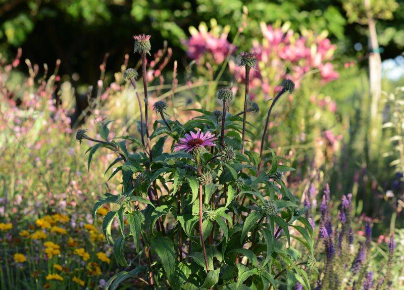 Garden_Evening_DSC_3803