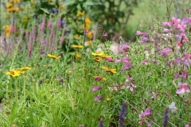 Hummingbird-Garden_DSC_2938