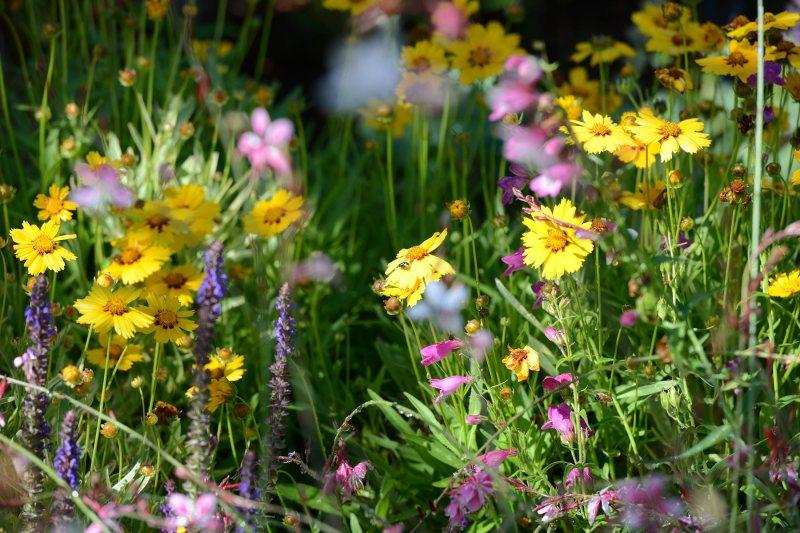 Hummingbird-Garden_DSC_3613
