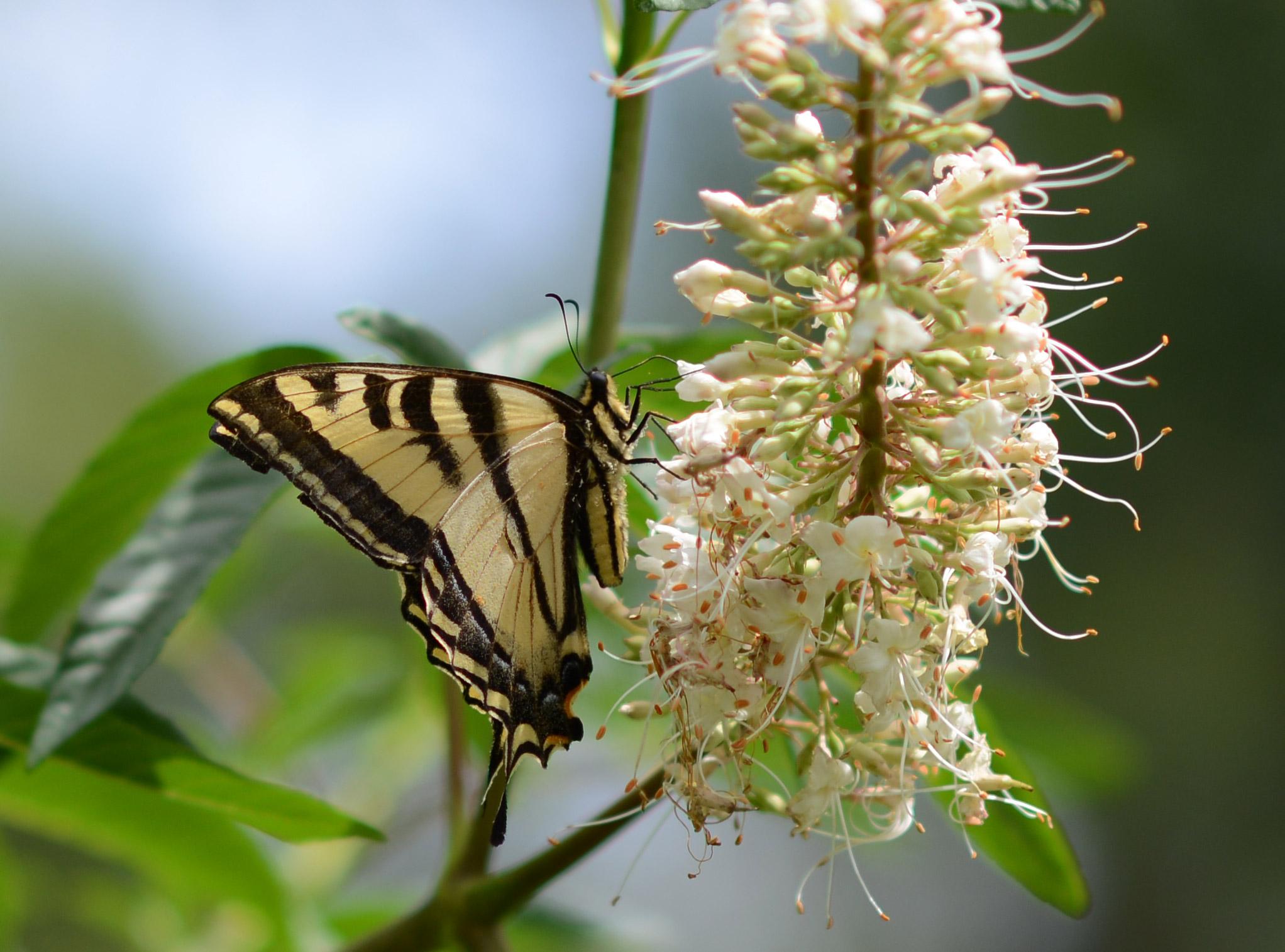 Monarch2_85_DSC_1831