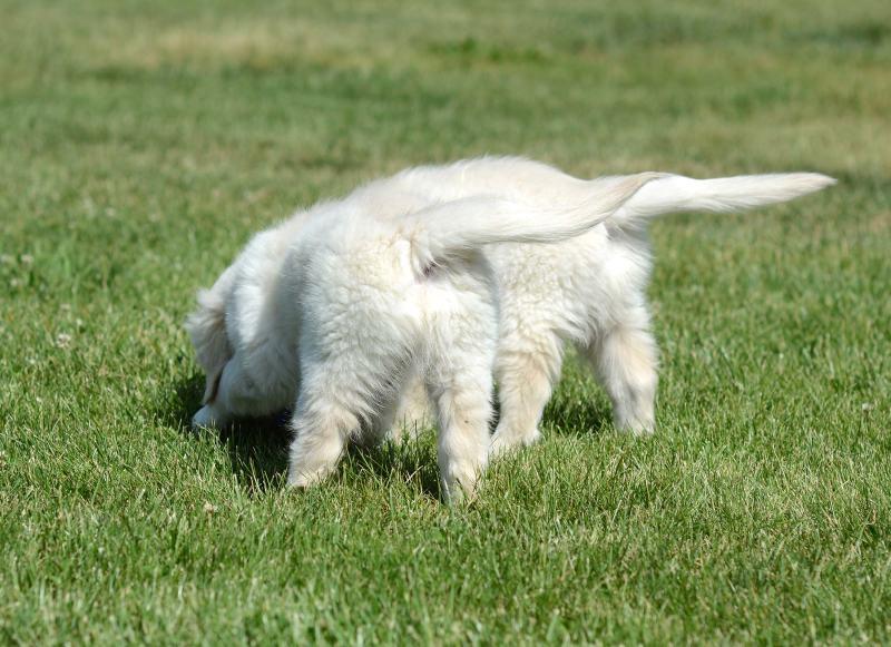 Puppy-Tails_DSC_1910