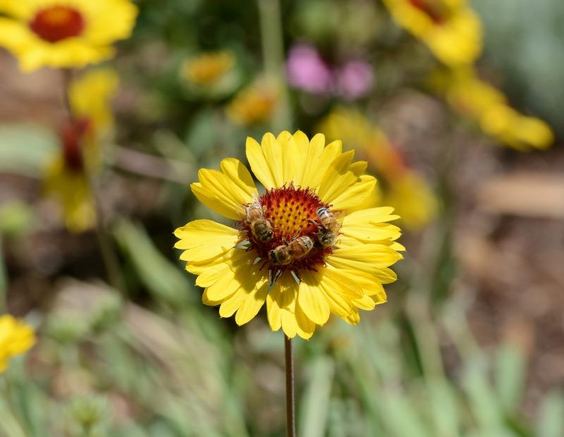 Bees_DSC_4571