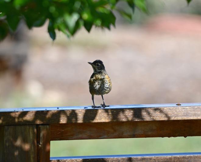 Bird_DSC_4371