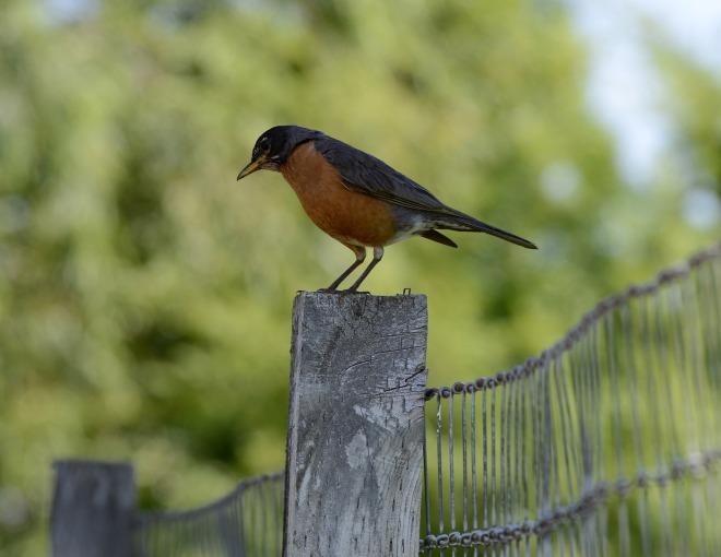 Bird_DSC_4432