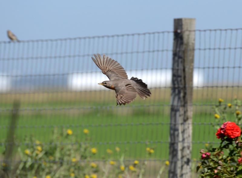 Bird_Flight_DSC_4390