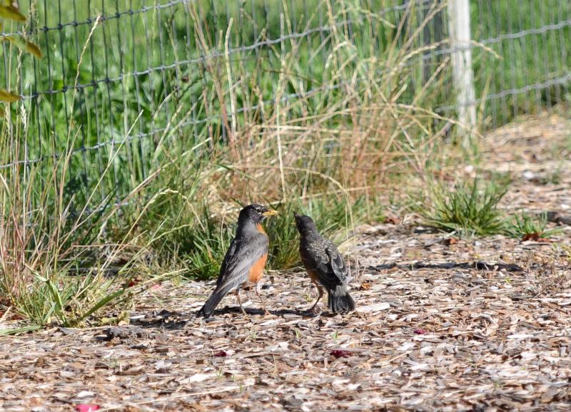 Birds_DSC_4613