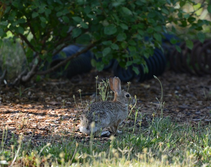 Bunny_DSC_4629
