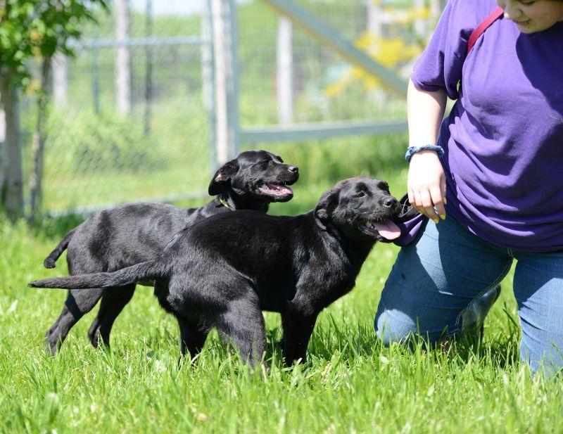 Burneys-Pups