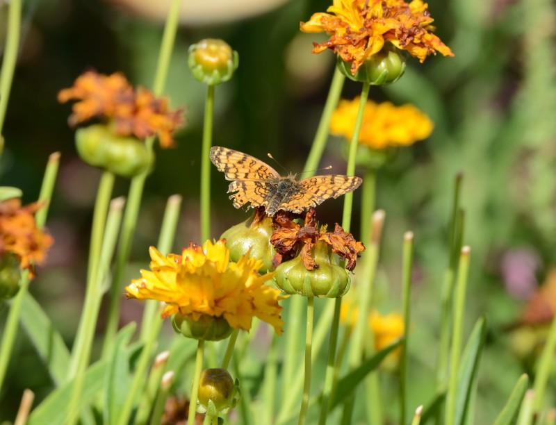 Butterfly_DSC_4299
