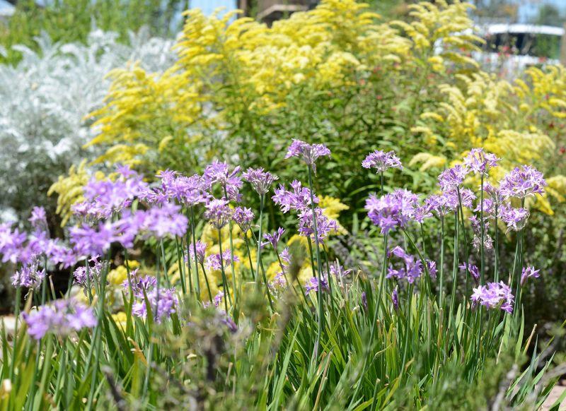Cottage-Garden_DSC_5583