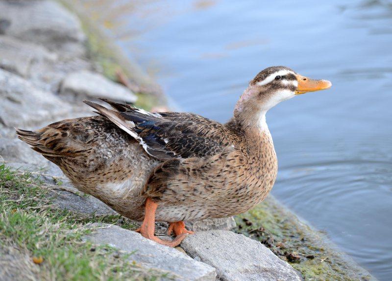 Fat-Duck_DSC_1526